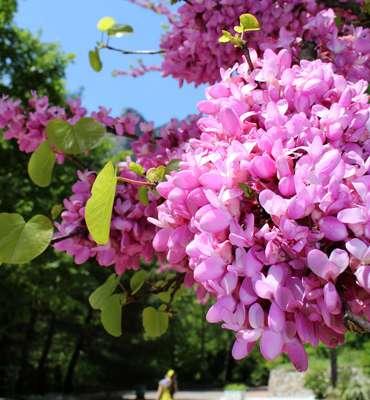 Майские праздники в Крыму 2021: отдых на майские праздники - туры в Ялту,  куда поехать - горный эко-отель Поляна Сказок